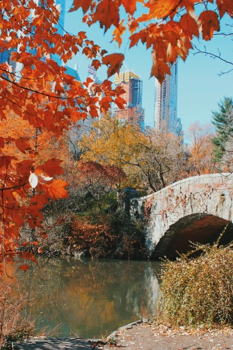 The perfect fall day in Central Park